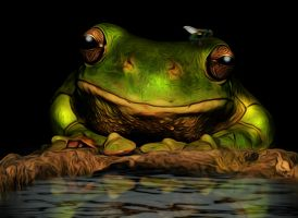 Happy Frog by hallbe