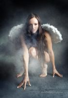 Dark Angel by Stridsberg