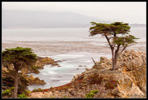 The Lone Cypress by AndrewShoemaker