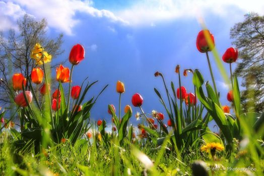 spring paradise 2 by MT-Photografien