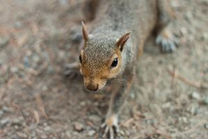 squirrel 1 by Joolin