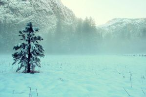 Yosemite Valley Winter by ConH
