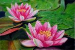 Waterlilies by riksons