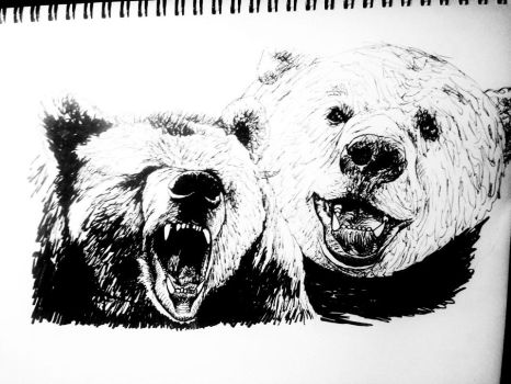 Two Bears by AndrewCJohnson
