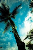 palm tree by icapturedbeauty