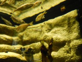 Fish at Milwaukee Zoo by Urceola