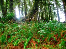 Oregon Forest by Blue-BirdPhotography