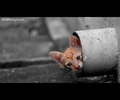 shy cat by theendlessphoto