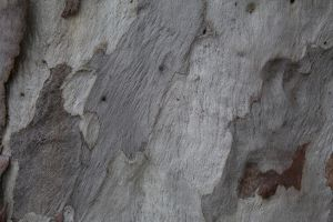Tree Bark 6 by decoaddict