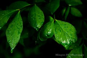 Rain Leaves 3 by justarus