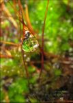 A drop in the moss by AnnaKirsten
