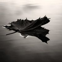 Floating or Falling by Zemni