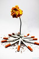Smoking kills slowly by 7LM