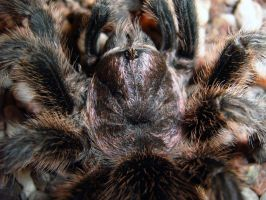 Spooky - Macro Close up by SolidAlexei