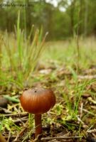 A Toadstool View by BreeSpawn
