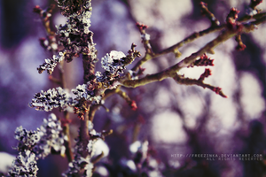 Beautiful branch... by freezinka