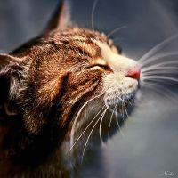 enjoy by nuke001