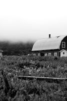 Foggy Farm by tasha-killer-coma