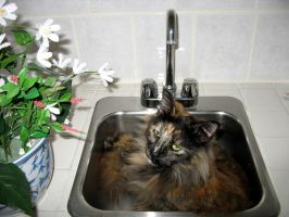 in sink kitty 1 by uberbechin