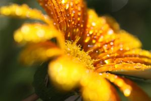 water drops 25 by yvaine2010