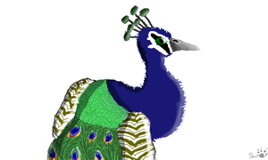 Peacock! (I used for a card!) by swiftshadow64