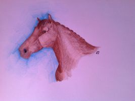 Brown horse by Noedje