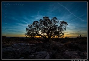 Solitude by aFeinPhoto-com