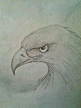 Work in Progress -- Eagle by miyuki184