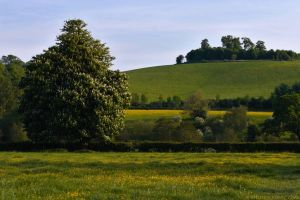 Wittenham Clumps by runique