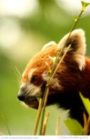 Tasty Bamboo by In-the-picture