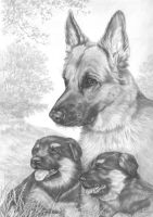 German Shepherds by lynniel