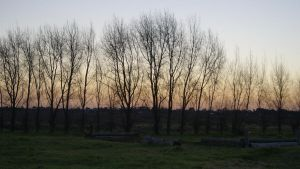 Tree Sunset 3 by Valmanther
