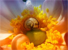 Little snail in Wonderland by plumita1