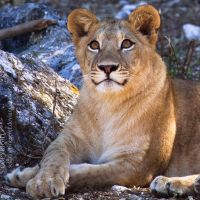 The Smiling Lioness by sekhmet-neseret