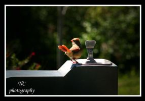 Can you turn the water on for me ? by TlCphotography730