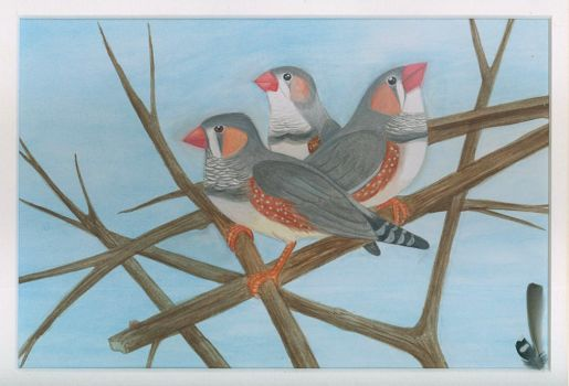Watercolour Zebra Finches by Articuno