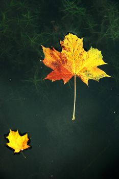 The Art of Autumn by EarthHart