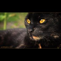Her name Gizmo by SmartyPhoto
