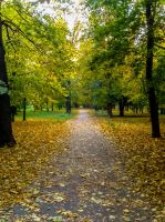 Pavement Of Leaves by Androw911