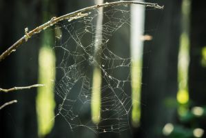 Spiderweb by creamypeach
