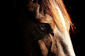 Eye of a horse by almasart
