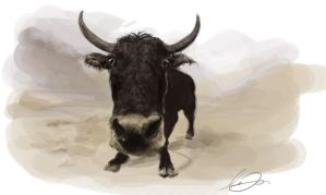 Yak by howlinghorse
