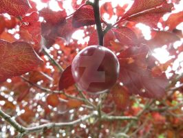 Berry From a Tree by Charlief43