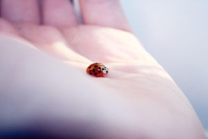 Ladybird 2 by Emiliee91