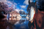 Horse Picture by NevadaMarie