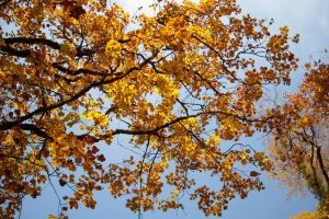 Autumn leaves in the sky by TinyWild