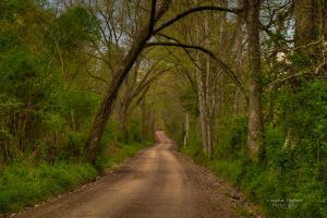 Country Road by LeashaHooker