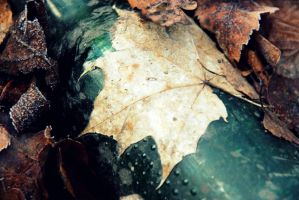 Leaf On A Bottle by Shreever