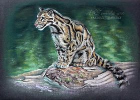 the clouded leopard by 50dd