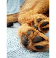 Paws for thought. by AgnesVita